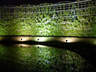 Glicinas blancas sobre estructuras enormes reflejadas en el agua