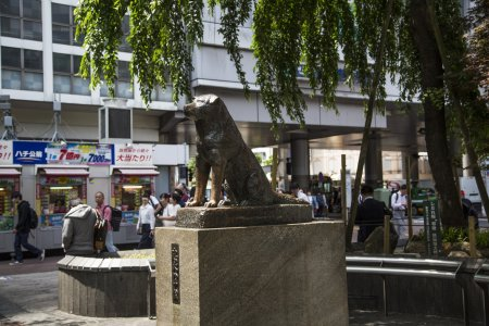 Статуя Хатико в Сибуе