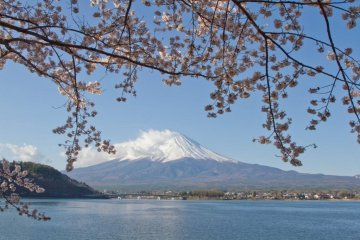 Spring in Japan is defined by cherry blossoms blooming across the country