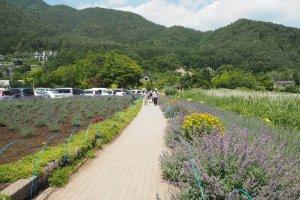 เทศกาลดอกไม้ประจำปีริมทะเลสาบคาวากุจิโกะ