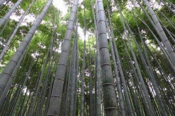 The insurmountable bamboo forest