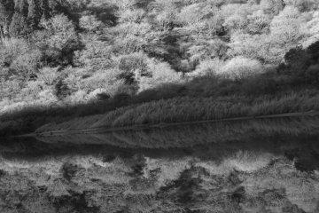 하코네 쇼진 연못의 아름다움