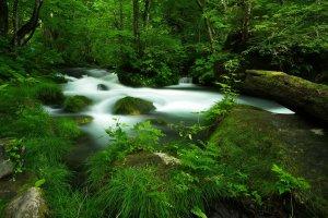 Along the Oirase stream