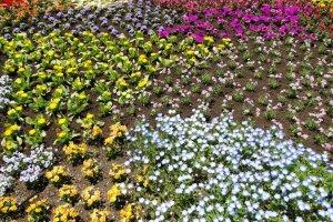 عرض من الأزهار المتفتحة