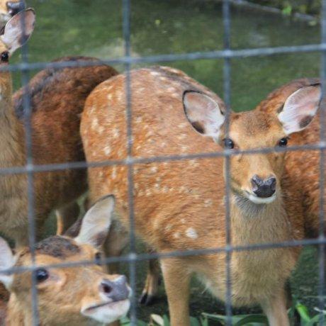 The Mammals of  The Okinawa Zoo