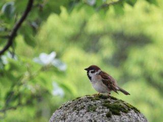 Toà thành cổ là ngôi nhà chung cho một vài loài chim sẻ