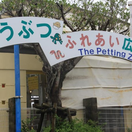 The Okinawa Zoo's Petting Zoo