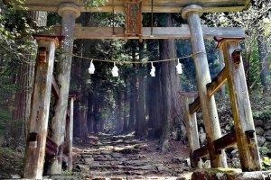 Тории храма Косугэ