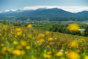 Cảnh đồi ở Furano