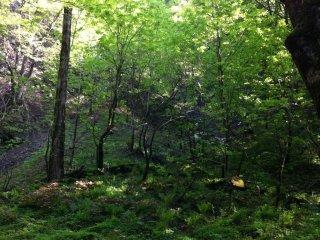Trên đường tới thác nước, tôi đã đi bộ trong rừng và chiêm ngưỡng những tán cây xanh tươi