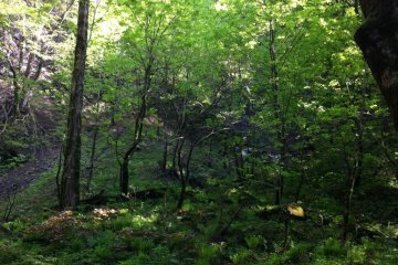 On my way to the waterfall I walked in the forest and enjoyed the fresh green leaves