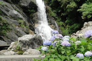 Waterfall and hydrangea