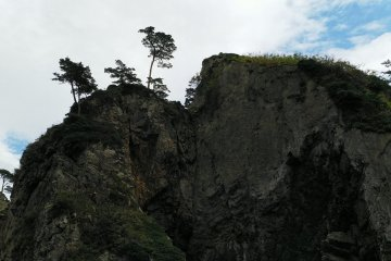 A pine on the top of the crag in the ocean