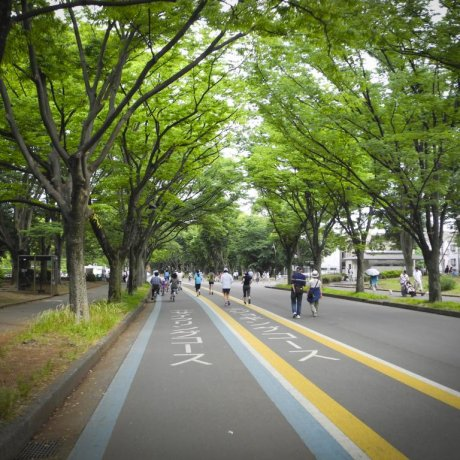 A 1964 Olympic Heritage: Komazawa Olympic Park