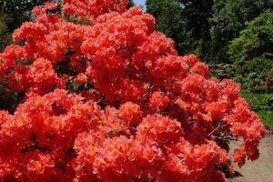Добро пожаловать в ботанические сады Саппоро