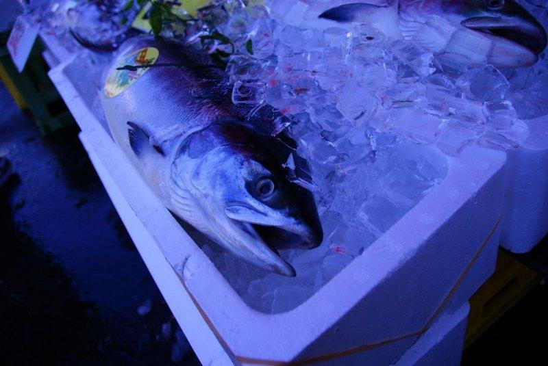 Fresh fish in Hakodate