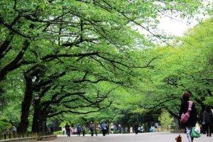 신록이 아름다운 우에노공원 산책