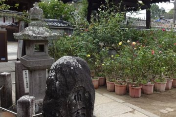 Strolling around the temple grounds