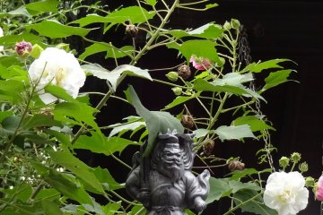 Who is sitting there in the rose bush?