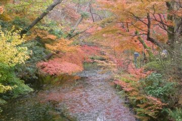 The autumn palette of Kojo Park