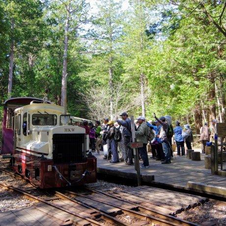 Aventures dans la forêt d'Agematsu