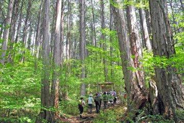 Hiking in the Akazawa National Forest
