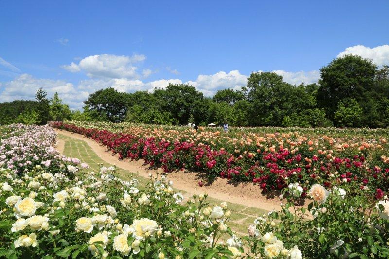 Long Border Garden