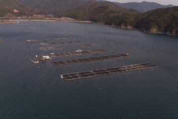 Aquaculture rafts in the bay