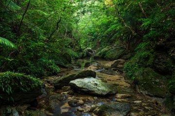 Forest Yanbaru of Higashi Village