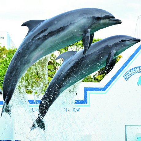 Shinagawa Aquarium: An Aquatic Escape