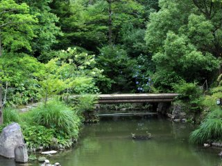 Lush greenery surrounds you at the Kokura Castle Japanese Garden.