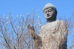 Амида Будда и сакура осенью