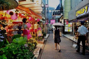 <p>Plantas decorativas est&aacute;n por toda la calle</p>