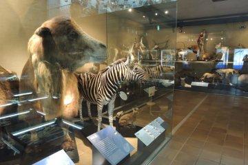 Taixdermy of mammals around the world