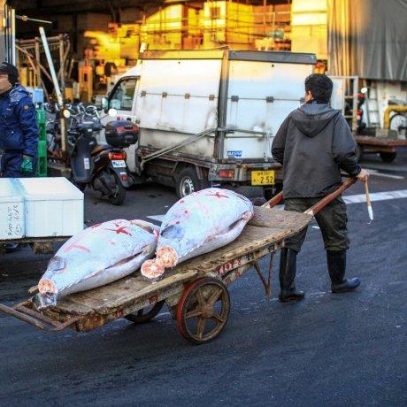 Cutting a 489lb Tuna, Tsukiji Style