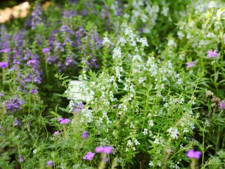 Em julho existe uma grande variedade de flores delicadas