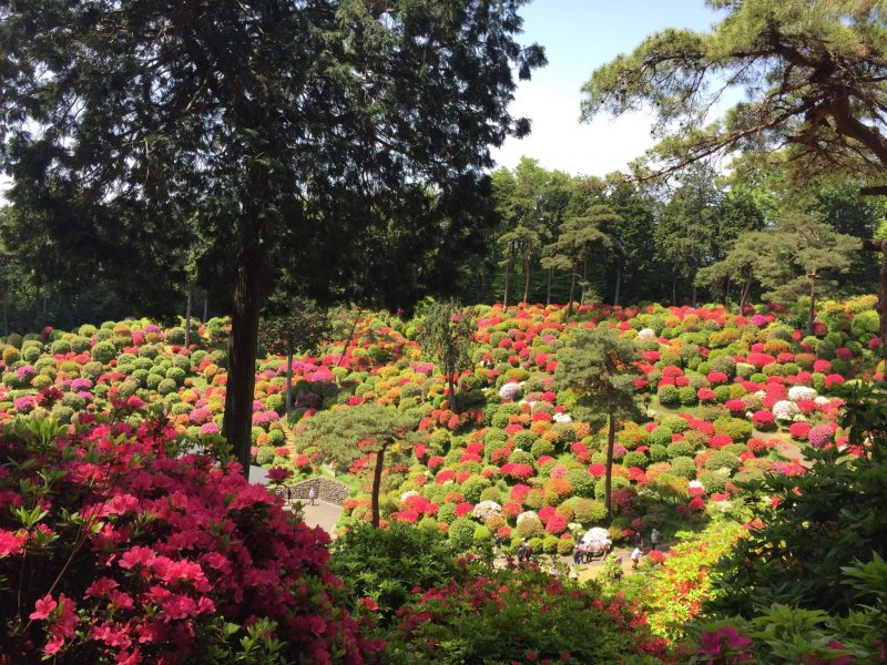 The springtime azaleas here are spectacular