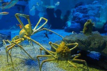 แทงค์น้ำแต่ละแทงค์จัดแสดงสัตว์น้ำที่อาศัยอยู่ในภูมิภาคขอบแปซิฟิก คือประเทศที่อยู่โดยรอบมหาสมุทรแปซิฟิก รวมถึงหมู่เกาะและเกาะเล็กๆ ในแอ่งมหาสมุทรแปซิฟิก