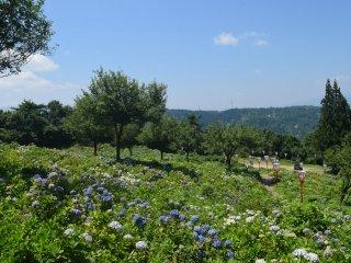 จากด้านบนของสวนคุณสามารถชมทิวทัศน์อันงดงามของภูเขาโดยรอบ