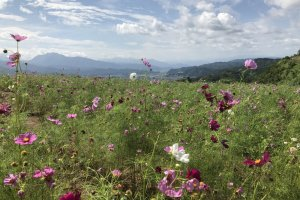 The cosmos park is a peaceful spot to soak up the beauty of nature
