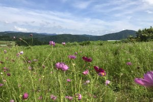 Những ngọn đồi nhấp nhô và những đóa hoa xinh đẹp