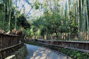 เส้นทางป่าไผ่