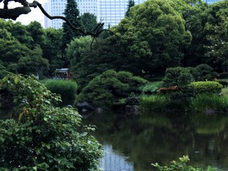 Summertime brings out luscious green from the trees and bushes that fill Hibiya Park.