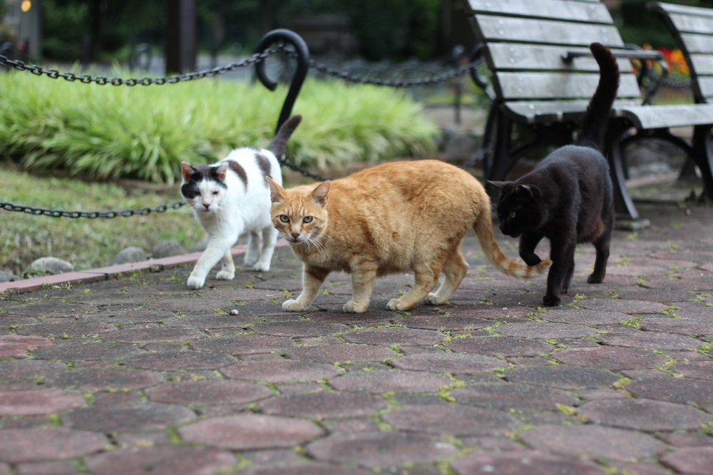 Look! It's the local Hibiya Park cat family.
