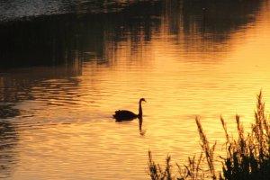 Картина на закате