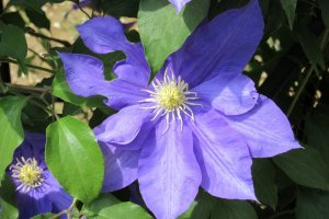 В парке много видов этих цветов