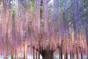Большое дерево с вечерней подсветкой
