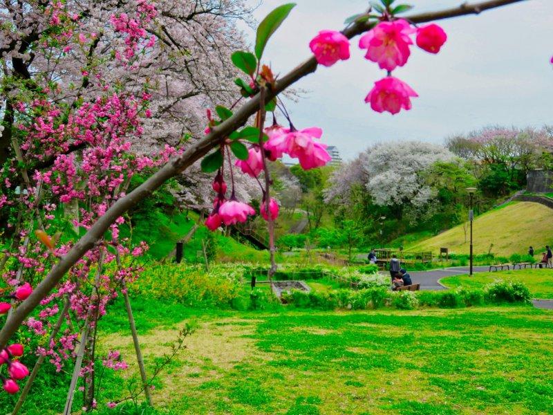 Парк Ходогая