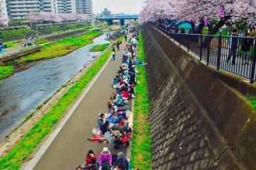 Почти все места вдоль канала в Тоцуке заняты