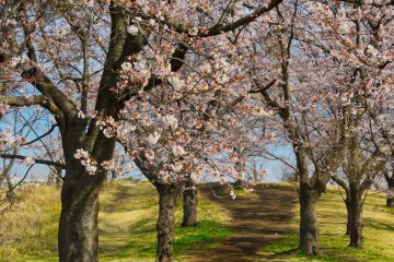 Природный парк Кодомо, северная сторона